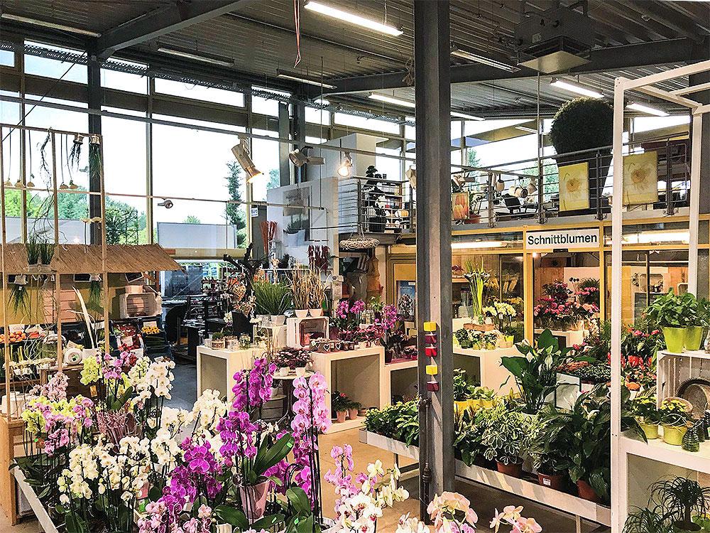 Garten Müller Die Grüne Oase In Köln Weiden Zimmerpflanzen