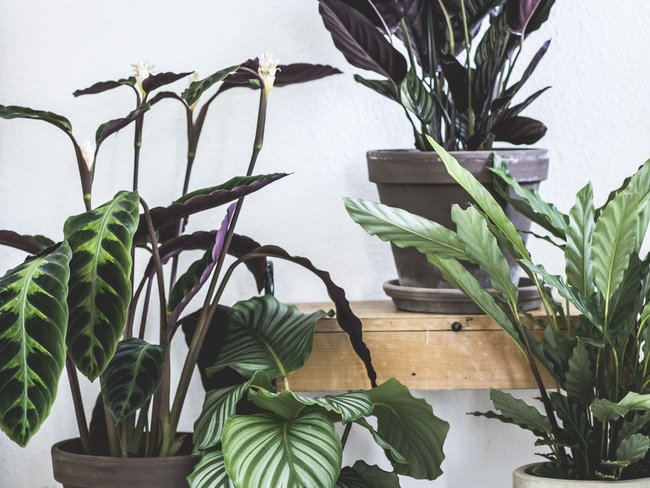 garten m ller die gr ne oase in k ln weiden garten m ller trends. Black Bedroom Furniture Sets. Home Design Ideas